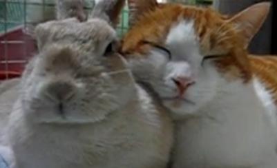 時々、ウサちゃんの寝床にやって来て寄り添うようにして眠りにつくネコちゃん。 ウサちゃんも慣れた様子でじっとしています。  お互いに居心地がいいんでしょうね。